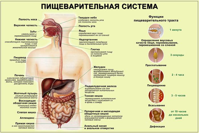 паразиты в организме очистка