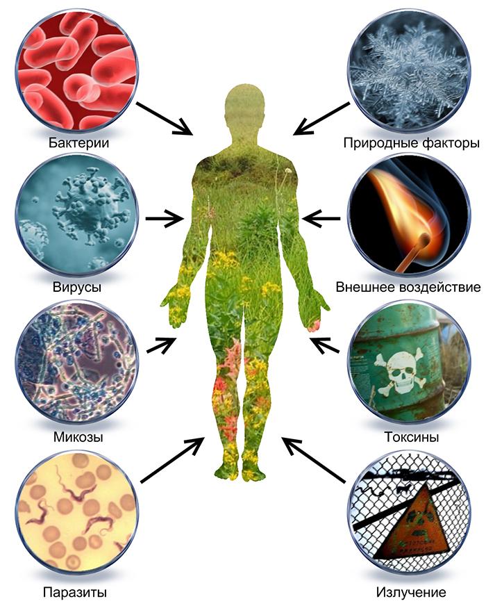 паразиты в организме глисты
